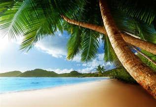 Praia 001-Praia tropical e palmeiras.jpg