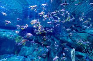 Natureza 076-Fundo do mar colorido.jpg