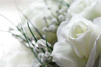 Floral 010-Rosas brancas.jpg