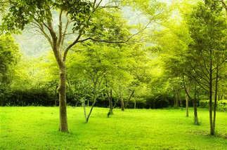 Floresta Natureza 387.jpg