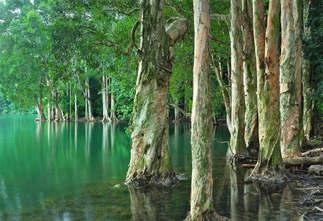 Floresta Natureza 179.jpg