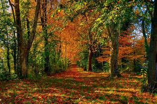 Floresta Natureza 332.jpg