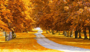 Natureza 066-Caminho etre as arvores do outono.jpg