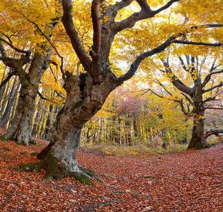 Floresta Natureza 430.jpg