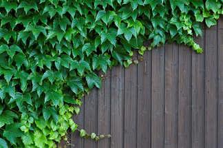 Natureza 051-Muro de madeira com plantas.jpg