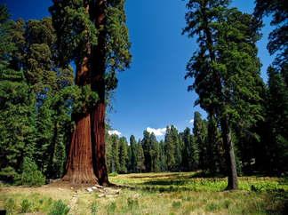 Floresta Natureza 126.jpg