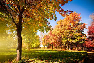 Floresta Natureza 213.jpg