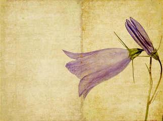 Floral 018-Watsonia.jpg