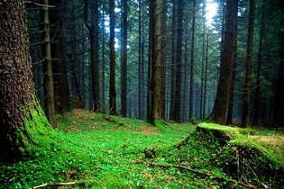Floresta Natureza 149.jpg