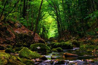 Floresta Natureza 225.jpg