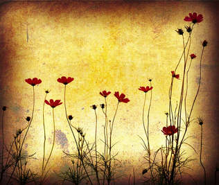 Floral 028-Papoula vintage.jpg
