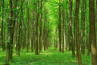 Floresta Natureza 127.jpg