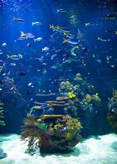 Natureza 001-Fundo do mar.jpg