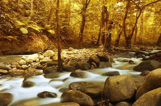 Floresta Natureza 208.jpg