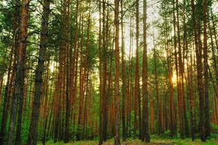 Floresta Natureza 018.jpg