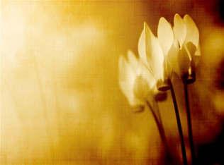 Floral 019.jpg