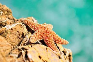 Natureza 077-Banho de sol da estrela do mar.jpg
