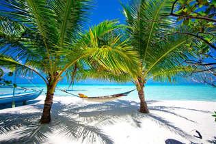 Praia 028-Palmeiras tropicais.jpg