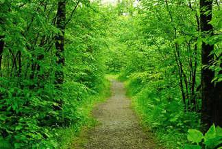 Floresta Natureza 168.jpg