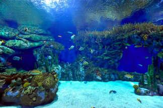 Natureza 002-Corais no fundo do mar.jpg