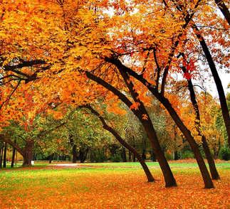 Floresta Natureza 214.jpg