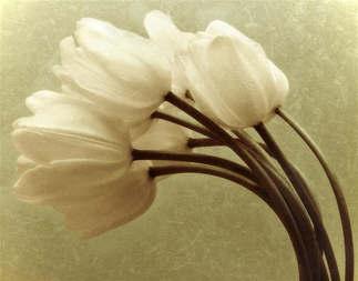 Floral 020-Tulipa vintage.jpg