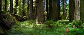 Floresta Natureza 101.jpg