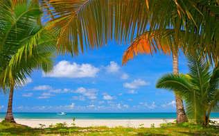 Praia 144-Palmeiras tropicais.jpg