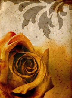 Floral 024-Rosa amarela vintage.jpg