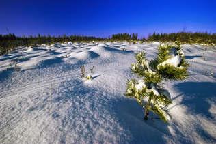 Natureza 067-Neve branquinha.jpg