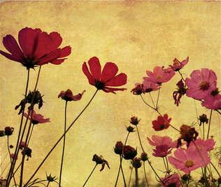 Floral 025-Papoula.jpg