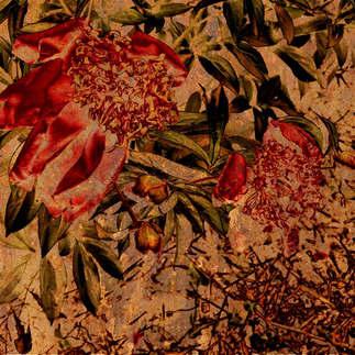 Floral 054.jpg