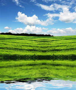Natureza 036-Reflexo do campo verde.jpg