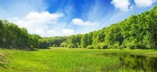 Natureza 052-Campos verdes.jpg