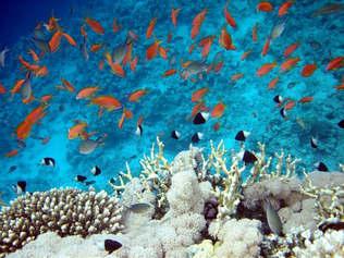 Natureza 030-Fundo do mar e cardume de peixes.jpg
