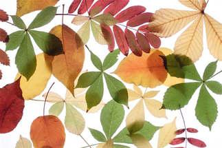Floral 044-Mix de folhas.jpg