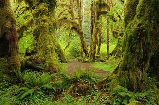 Floresta Natureza 231.jpg