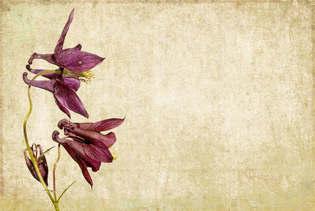 Floral 017.jpg