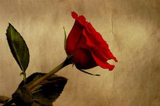 Floral 026-Rosa vermelhas.jpg