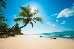 Praia 047-Palmeira e sol no Sri Lanka.jpg