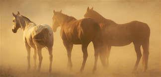 Animais 012 Cavalos.jpg