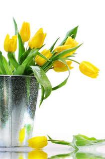 Floral 001-Tulipas decorativas.jpg