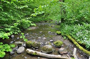 Floresta Natureza 359.jpg