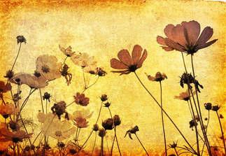 Floral 027-Papoula.jpg