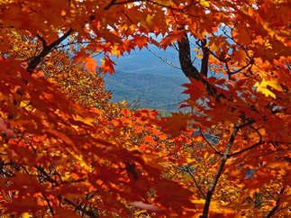 Natureza 020-Outono.jpg