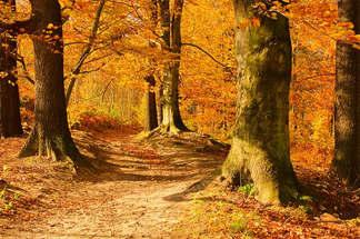 Floresta Natureza 233.jpg