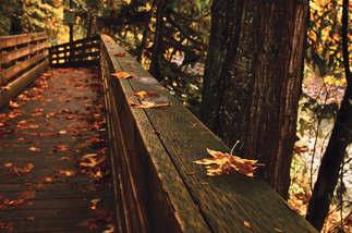 Natureza 063-Ponte no outono.jpg