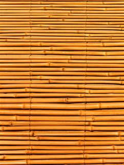 Reprodução 099-Bambu.jpg