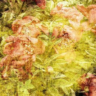 Floral 046-Arte envelhecida.jpg