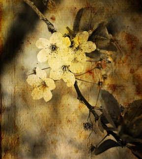 Floral 032-Orquídea.jpg